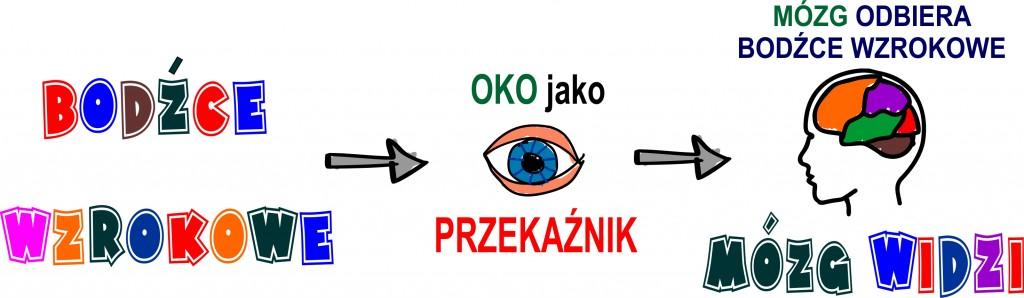 bodźce wzrokowe - grafika 1