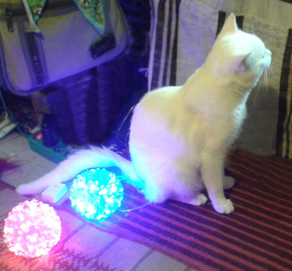Kolorowo i świecąco i z kotem :-)