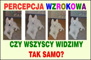 PERCEPCJA WZROKOWA - mamotatopokazmi.pl